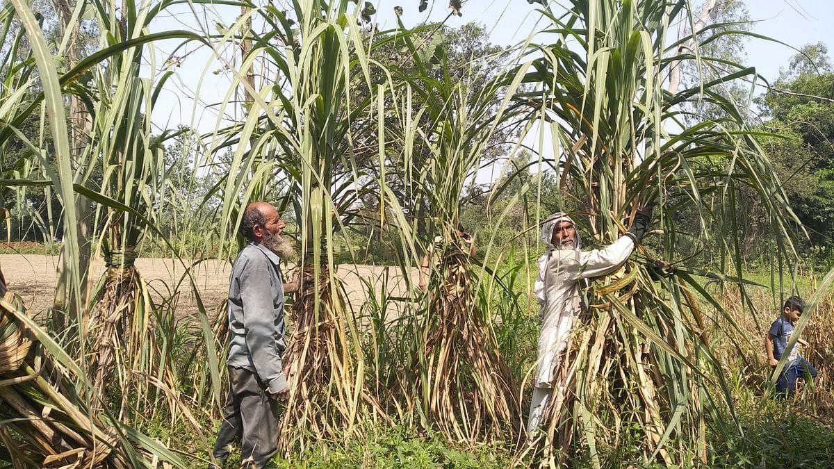 मोदी सरकार के चुनावी बजट से पश्चिमी यूपी के किसानों में उबाल, बोले- हमने राहत मांगी थी, खैरात नहीं