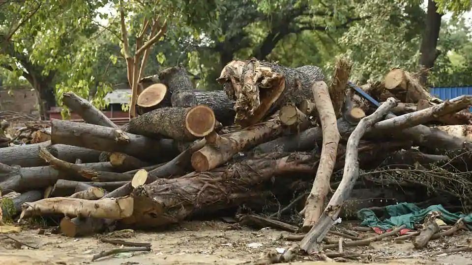 पर्यावरण पर प्रहार: गुजरात की बीजेपी सरकार ने 5 साल में कटवा दिए साढ़े छह लाख से ज्यादा पेड़