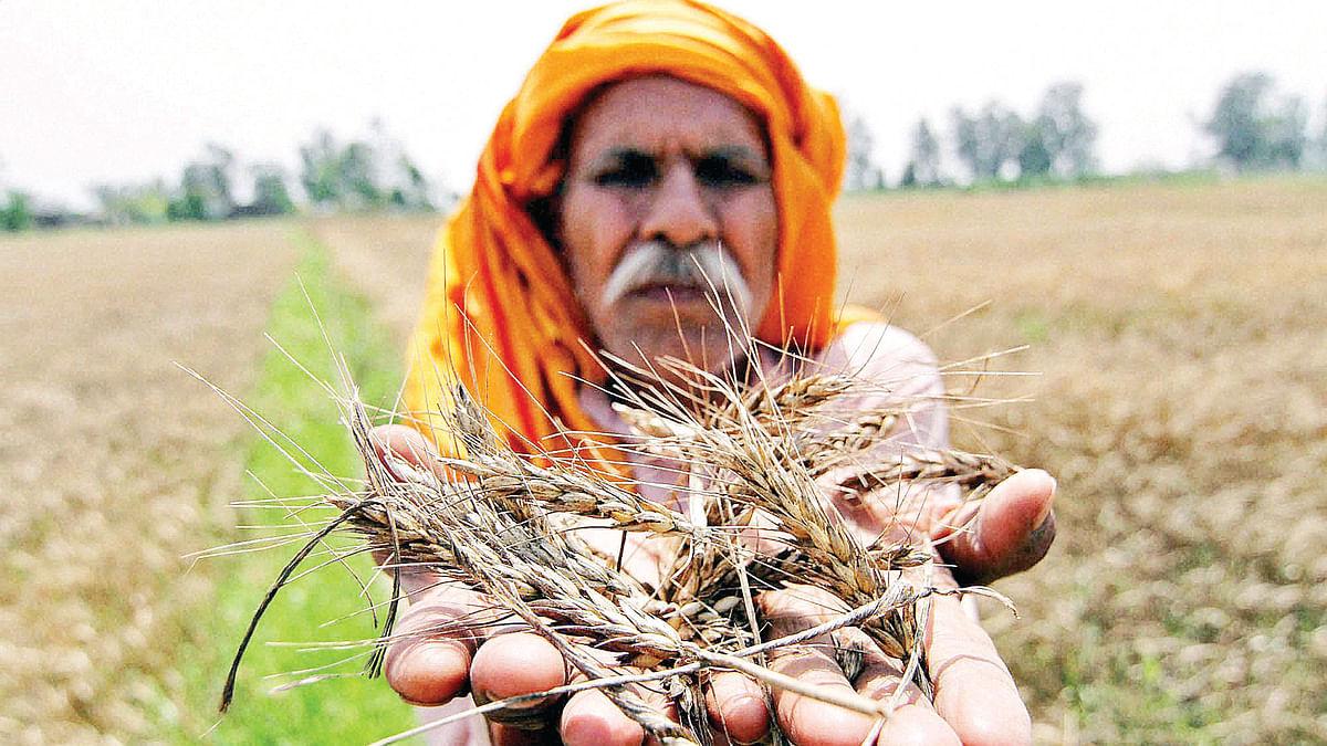 मोदी सरकार के पांच साल में खेती-किसानी के सामने खड़ा हुआ सबसे बड़ा संकट