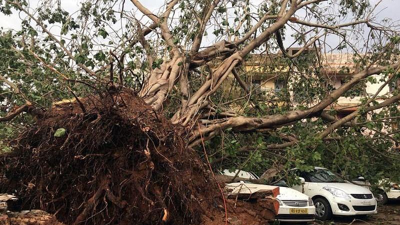 'फानी' तूफान LIVE: ओडिशा और बंगाल के बाद बांग्लादेश में फानी तूफान का कहर, 14 लोगों की मौत, 63 लोग घायल