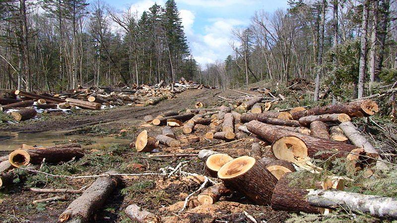वनों का विनाश बढ़ा रहा है जलवायु परिवर्तन का प्रभाव, बड़े पैमाने पर हो रही है कटाई