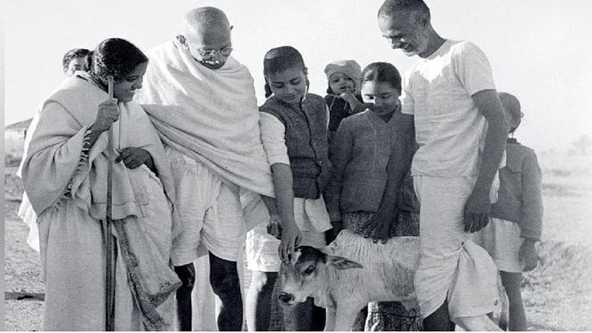 गांधी की विरासत में गोहत्या बंद करने के लिए मानव हत्या की आवश्यकता नहीं