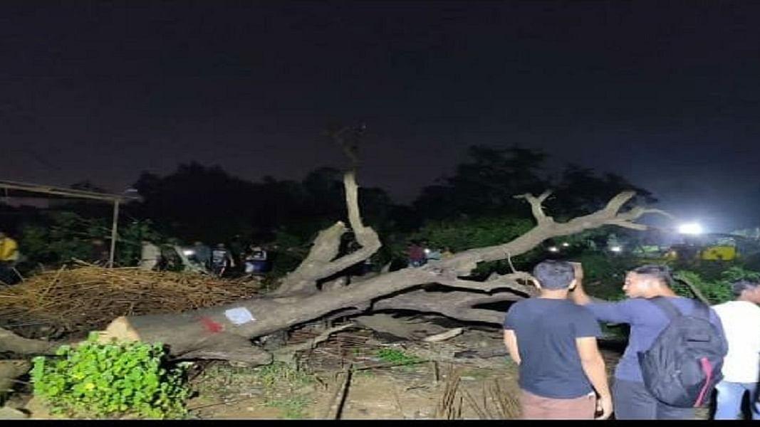 मुबंई का आरे कुछ नहीं, अभी तो वहां कटने वाले हैं लाखों पेड़, बीजेपी सरकार कस चुकी है कमर
