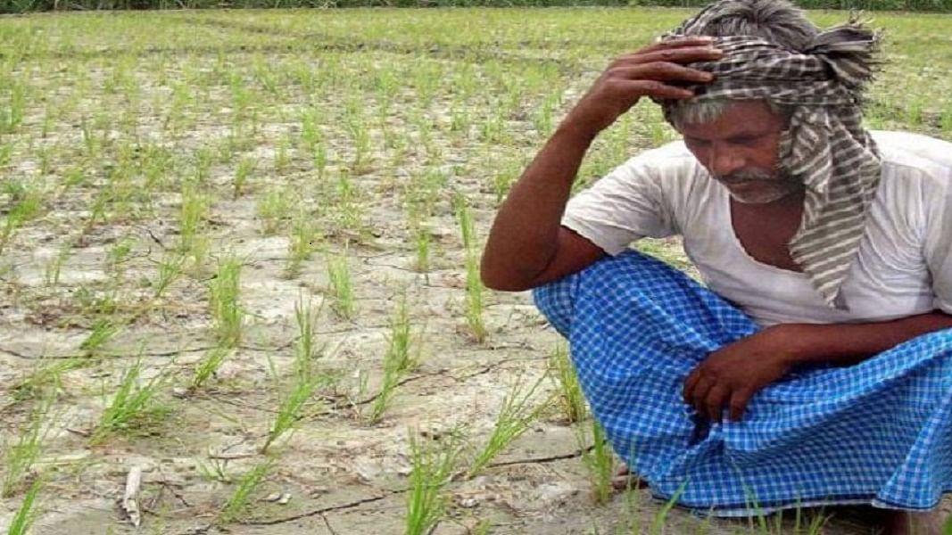 महाराष्ट्रः बीजेपी शासन में दोगुने से ज्यादा हुई किसानों की खुदकुशी, सिर्फ पिछले साल रोज 7 किसानों ने दी जान