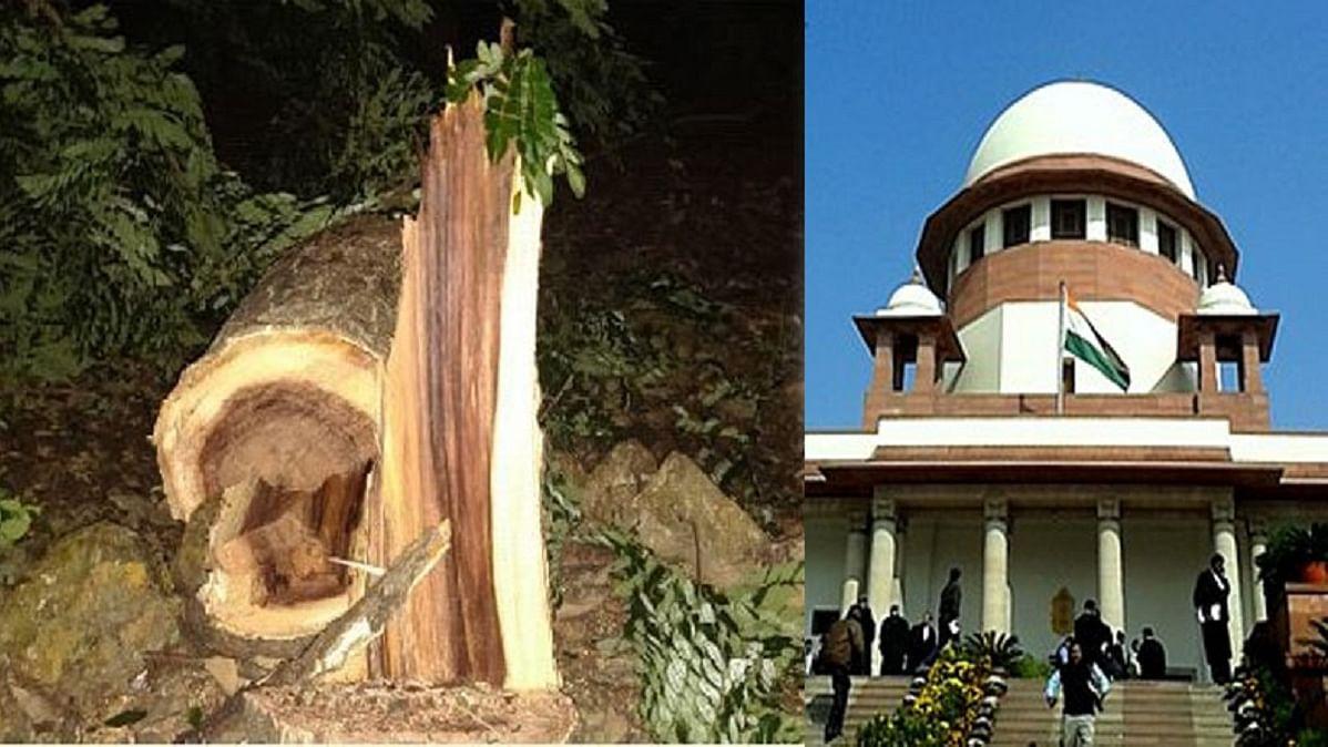 आरे में पेड़ों की कटाई पर सुप्रीम कोर्ट की रोक, लेकिन महाराष्ट्र सरकार बोली- जितने पेड़ काटने थे, काट चुके