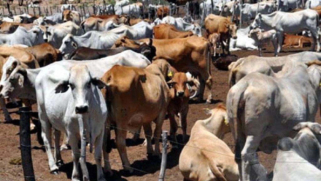 रामनगरी अयोध्या में गायें अब पहनेंगी कोट! ये है वजह