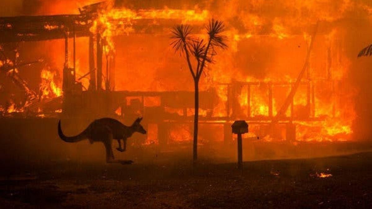 ऑस्टेलिया में आग की तबाही जारी, करोड़ों जानवरों के झुलसने से विलुप्ति का खतरा पैदा