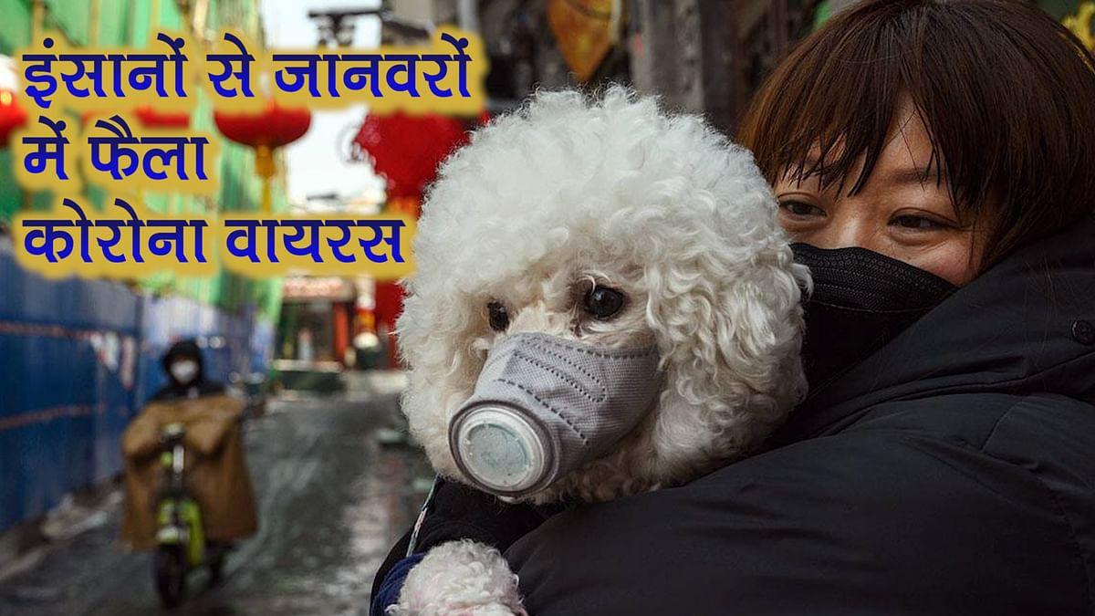 नवजीवन बुलेटिन: कोरोना वायरस और हुआ भयावह! इंसान के बाद जानवर बना शिकार, दिल्ली में मास्क-सैनिटाइजर के बढ़े दाम