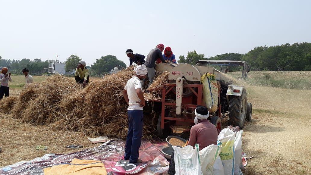 उत्तर प्रदेशः जैसी सरकार, वैसी फसल खरीद योजनाएं, गांव-गांव पैदा एजेंटों को फसल बेचने पर मजबूर किसान