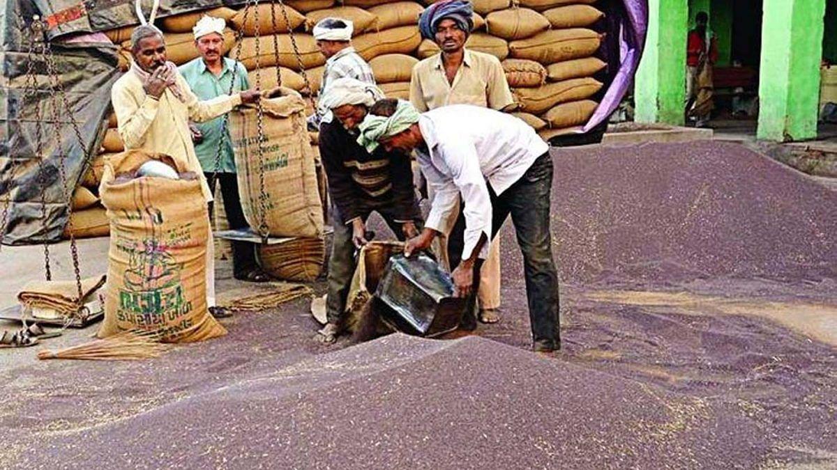 हरियाणा: किसानों को नहीं मिल रहा फसल का वाजिब दाम, मंडियों की अव्यवस्था से भी  परेशान, पूर्व सीएम हुड्डा ने उठाए सवाल