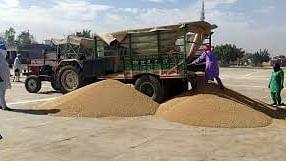 हरियाणा: फसल खरीद की कागजी व्यवस्था शुरु में ही हो गई हवा, आढ़ती हड़ताल पर, मजदूर नदारद और किसान हलकान