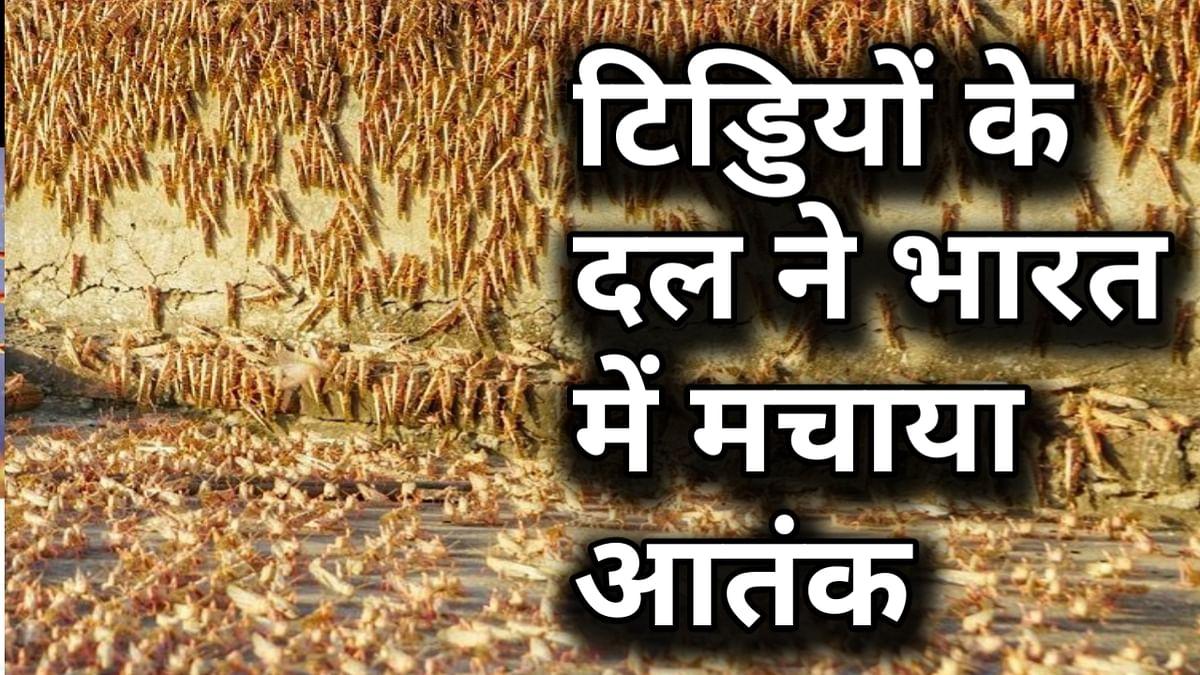 वीडियो: पाक से आए टिड्डी दल का भारत में हमला, जयपुर में टिड्डियों ने इस तरह मचाया आतंक!