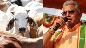 कोरोना से मचे कोहराम के बीच बंगाल BJP अध्यक्ष बोले- वायरस से बचने के लिए पिए गौमूत्र, गधे नहीं समझेंगे इसकी अहमियत