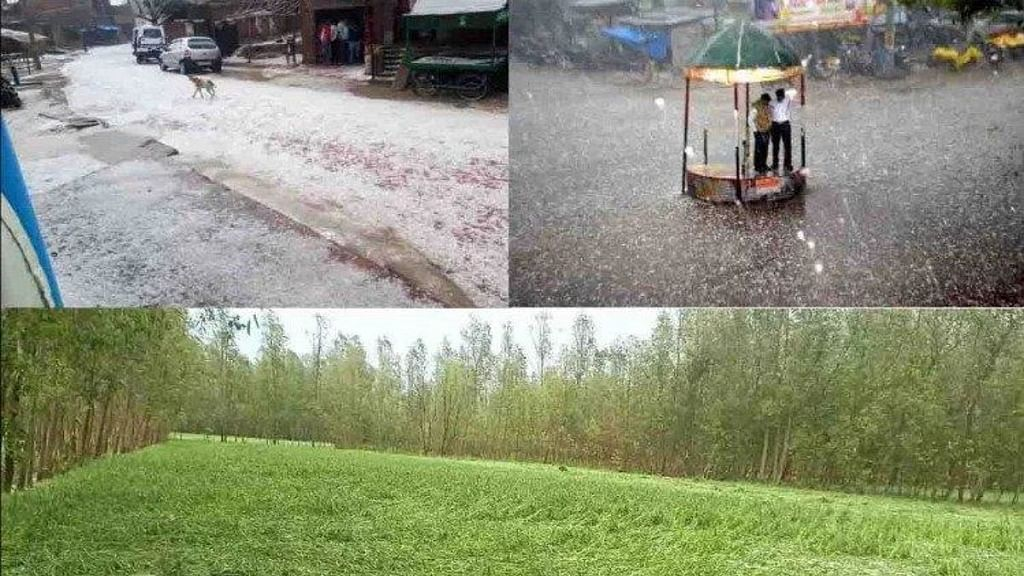 बिहार में बारिश और बाढ़ से किसानों पर टूटा 'कहर', करीब 20 जिलों में तबाही, 33 फीसदी फसलें बर्बाद