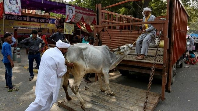 मध्य प्रदेश में गौ तस्करी के आरोपी की पुलिस की मौजूदगी में लिंचिंग की कोशिश, भीड़ ने घसीट-घसीट कर पीटा