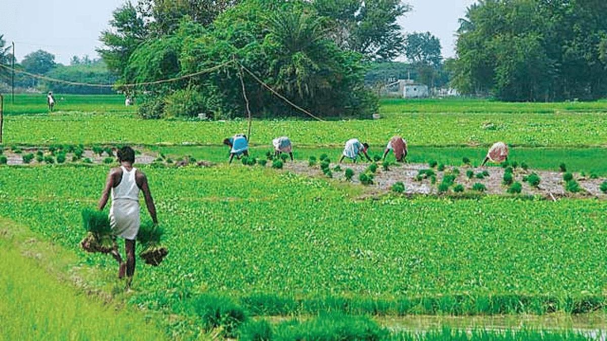 मृणाल पांडे का लेख: सरकार राजनीतिक लाभ-लोभ छोड़ खेती को जमीन पर उतारे, वरना घातक होंगे दूरगामी परिणाम