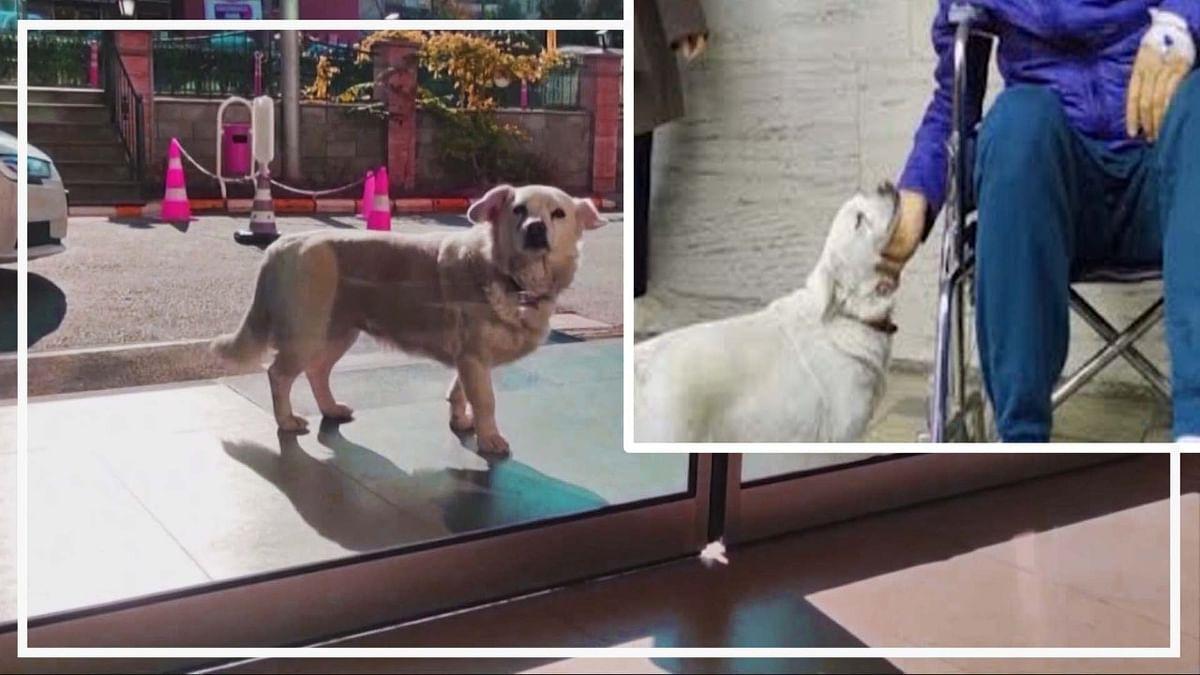 वीडियो: इस देश से आई कुत्ते की वफादारी की अनोखी तस्वीर, मालिक से मिलने के लिए कई दिनों तक अस्पताल के बाहर खड़ा रहा
