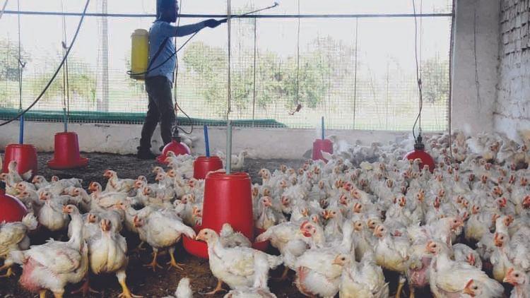 हरियाणा में बर्ड फ्लू की पुष्टि से हड़कंप, संक्रमित जोन से अंडा या पक्षी बाहर ले जाने पर लगी रोक