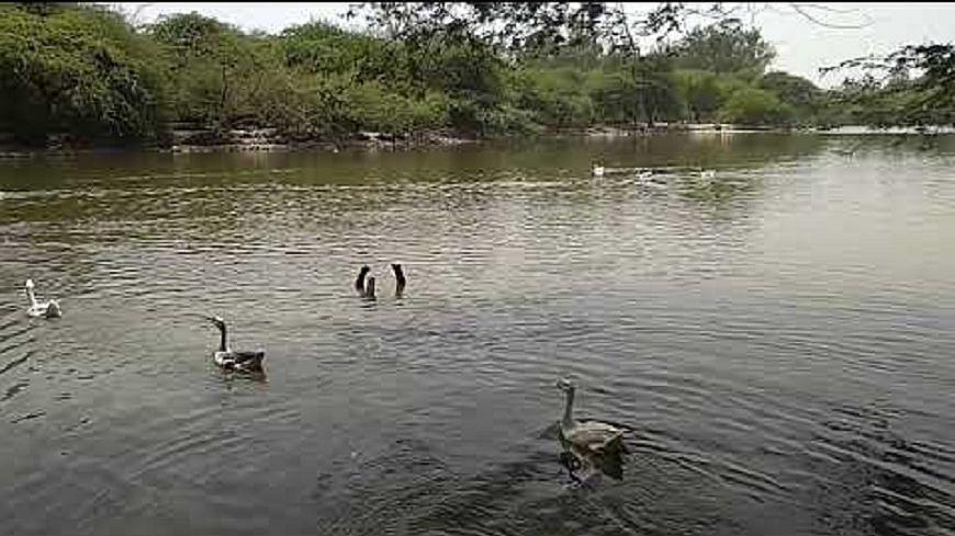 दिल्ली में बर्ड फ्लू की आशंका से दहशत, संजय झील में बतखों की मौत, गाजीपुर मुर्गा मार्केट दस दिन के लिए बंद