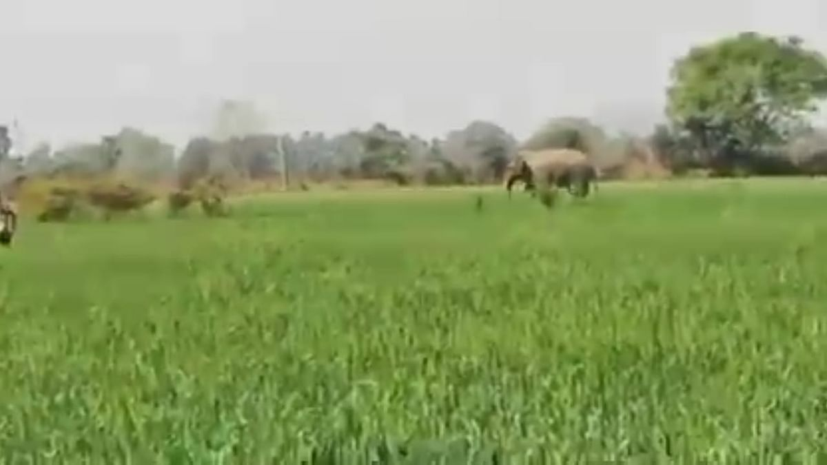 बिहार के नवादा में गजराज का उत्पात, अब तक 4 को कुचला, पकड़ में नहीं आने से दहशत में लोग