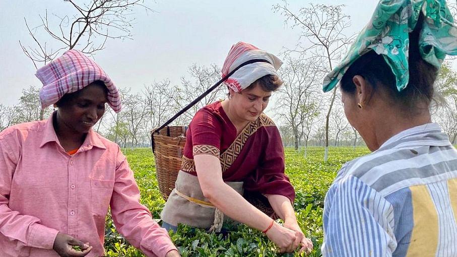 असम में प्रियंका गांधी ने चाय बागान के मजदूरों से की मुलाकात, टोकरी लगाकर तोड़ीं चाय की पत्तियां, देखें वीडियो