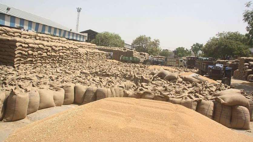 खट्टर सरकार के प्रबंधों के सारे दावे ध्वस्त, मंडियों में पड़े हैं लाखों टन गेहूं, 24 घंटे लिए रोकी गई खरीद