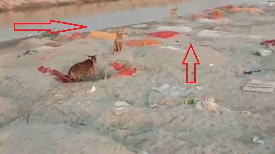 कोरोना के कहर के बीच यूपी से अब तक की सबसे भयावह तस्वीर! उन्नाव में गंगा नदी के किनारे बिखरी पड़ी हैं अनगिनत लाशें