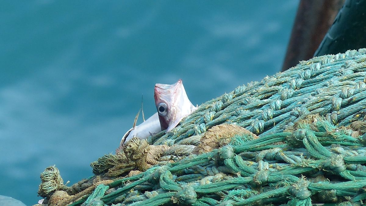 भोपाल में मछली मारने और बेचने पर 15 अगस्त तक प्रतिबंध, पकड़े जाने पर कड़ी कार्रवाई, जानें क्यों लिया गया ये फैसला