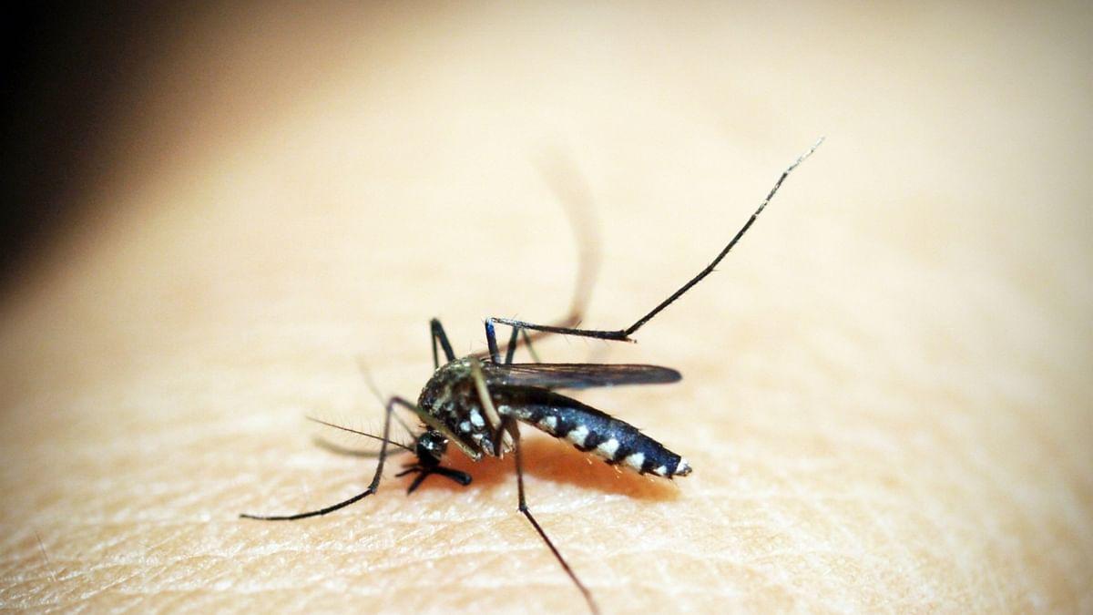 कोरोना के कहर के बीच दिल्ली में डेंगू और मलेरिया का प्रकोप! डेंगू के 36, मलेरिया के 11 मामले आए सामने