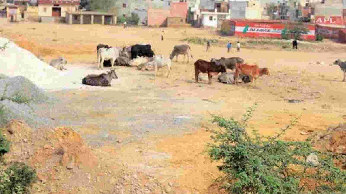 दिल्ली में निगम चुनाव से पहले शुरू हुई नाम पर राजनीति, मोहम्मदपुर गांव का नाम बदलकर माधवपुरम करने की मांग