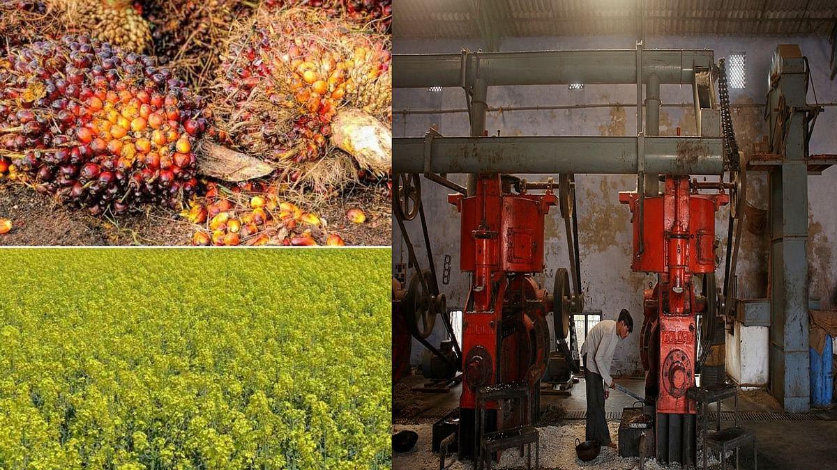 तिलहन की खेती और कारोबार