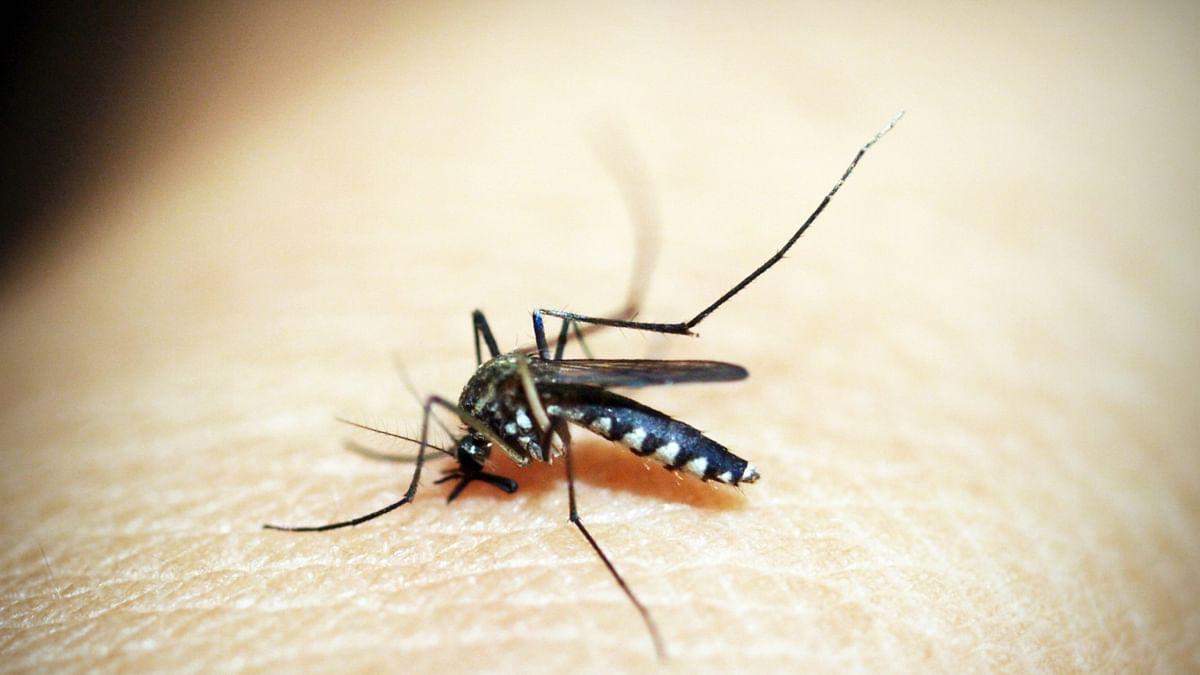 मध्य प्रदेश में कोरोना से राहत लेकिन डेंगू बना रहा आफत, कुछ दिनों में कई गुना बढ़ गए मरीज