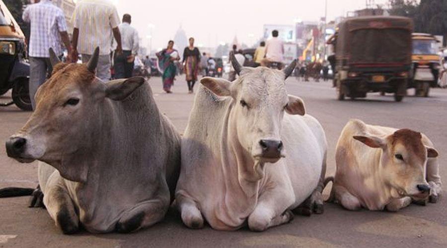 विष्णु नागर का व्यंग्यः गाय या भैंस को मां मानने में बड़ा लफड़ा, 'दुष्टों' के टेढ़े-मेढ़े सवालों का जवाब कहां से दें!