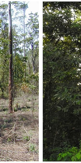 Data from: Effects of restoration on tree communities and carbon storage in rainforest fragments of the Western Ghats, India
