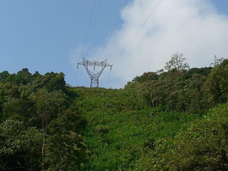 Powerline slicing through forest
