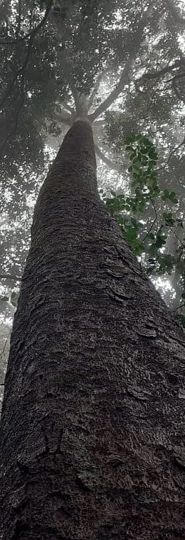 Altered stand structure and tree allometry reduce carbon storage in evergreen forest fragments in India's Western Ghats