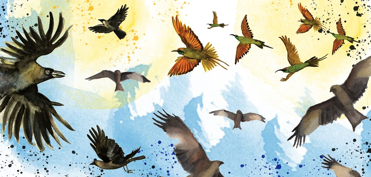 Birds That Sing Their Name