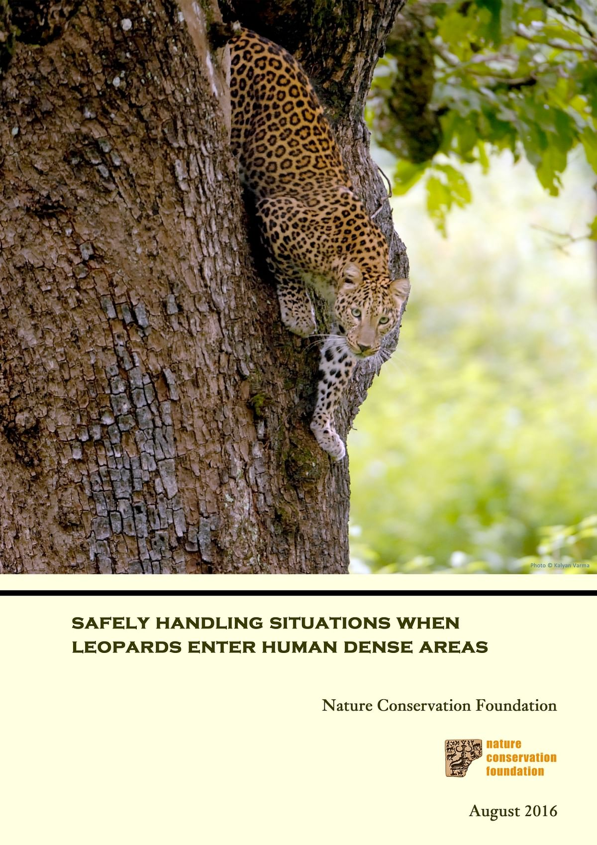 Safely handling situations when leopards enter human dense areas - English version