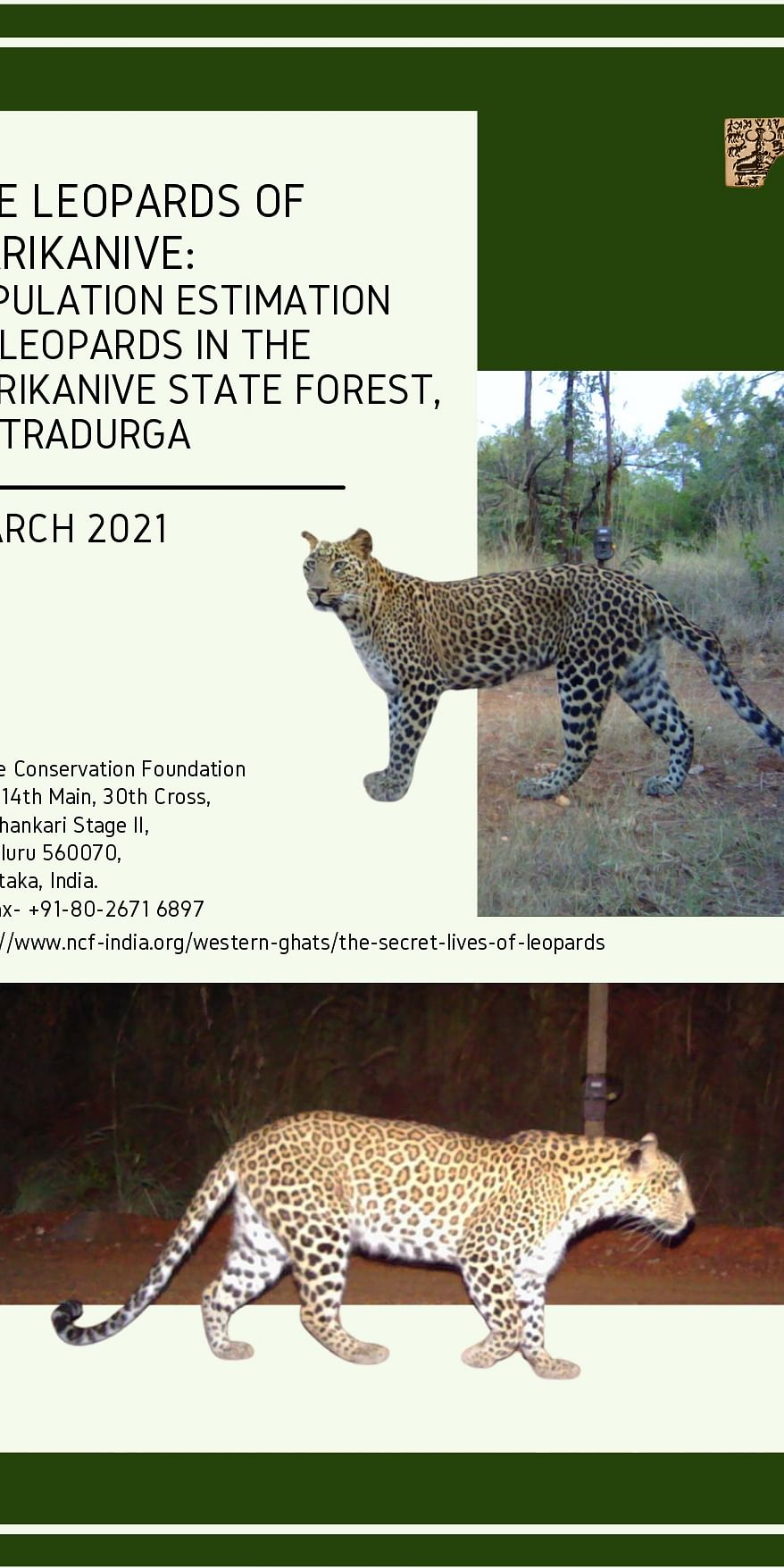 The leopards of Marikanive: Population estimation of leopards in the Marikanive State Forest, Chitradurga