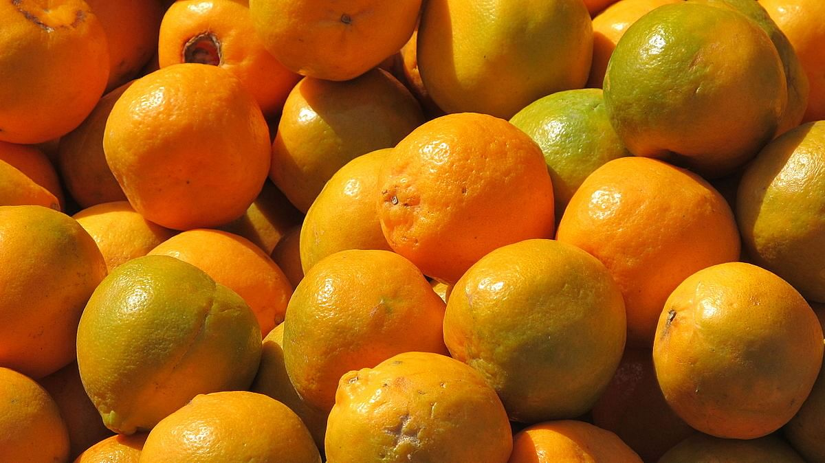 First consignment of Nagpur oranges flagged off to Dubai