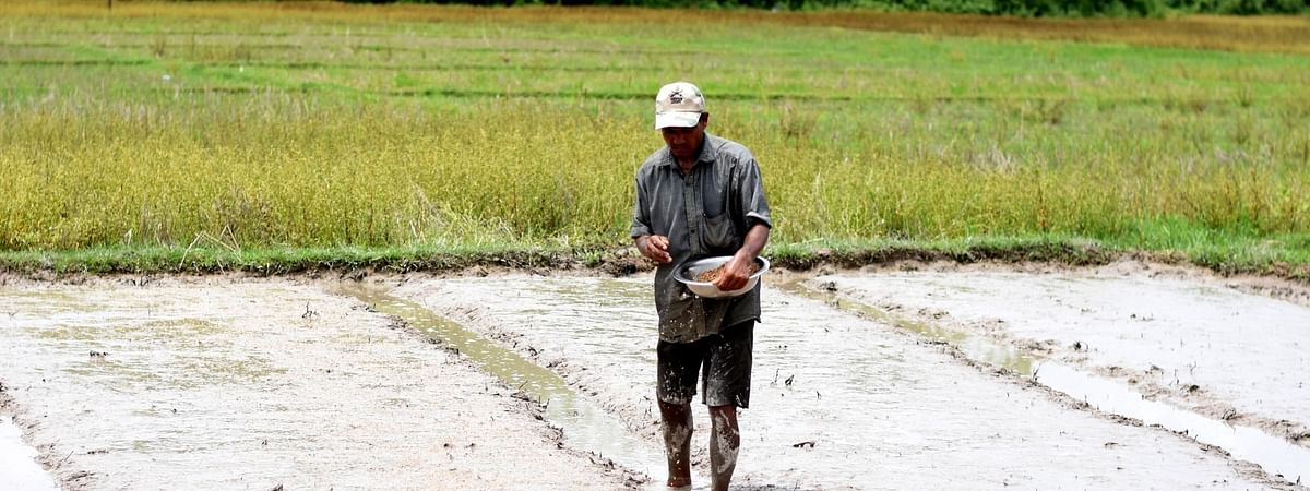 A farmer sowing paddy seeds in his field at Howraghat in Assam's Karbi Anglong district.