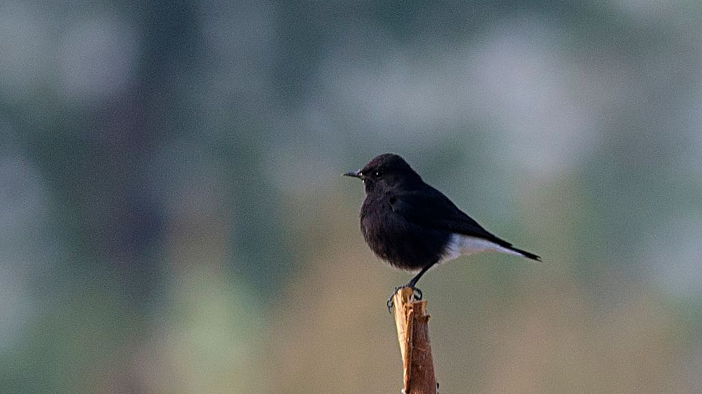 Bird photography leads to discovery of species, says ornithologist