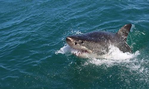 Shark kills spearfishing man in Australia