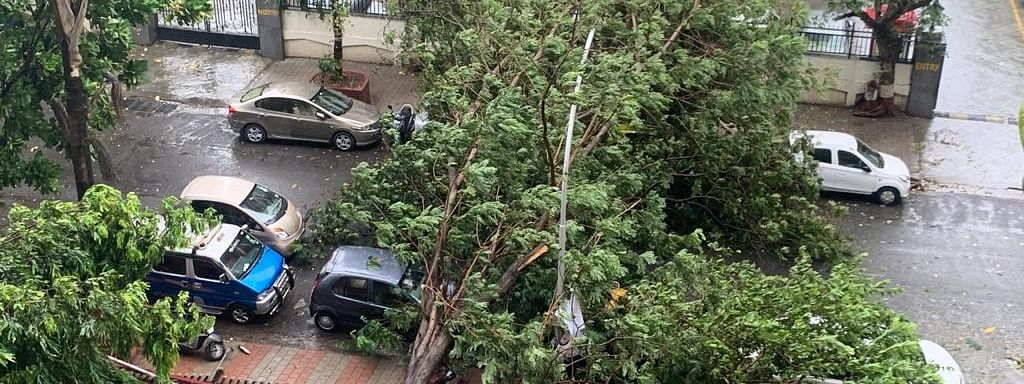 A tree that got uprooted and fell on parked cars at Cuffe Parade in Mumbai during rains triggered by the effect of Cyclone Nisarga which made a landfall near Harihareshwar in adjoining Raigad district of Maharashtra on June 3, 2020.