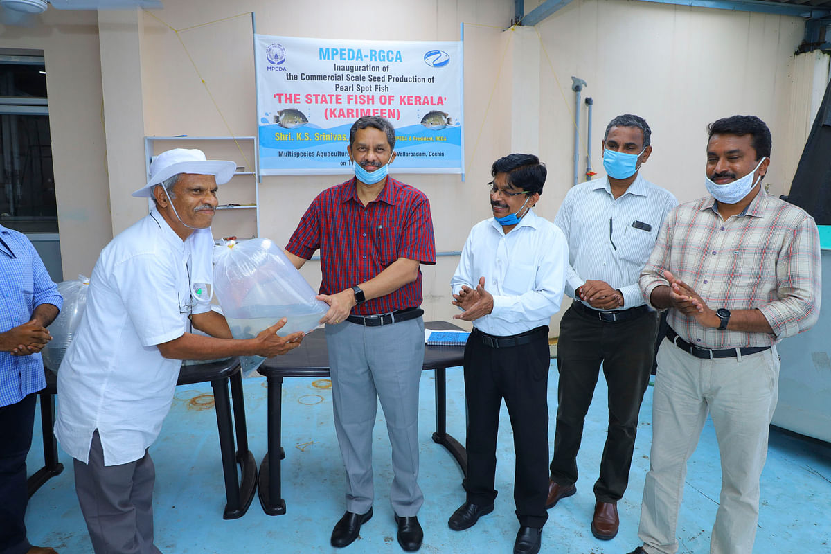 MPEDA Chairman K S Srinivas handing over the first batch of Karimeen seed produced and sold from its Multispecies Aquaculture Complex to a farmer, P Gangadharan, at Vallarpadam in Kochi, Kerala on June 19, 2020.