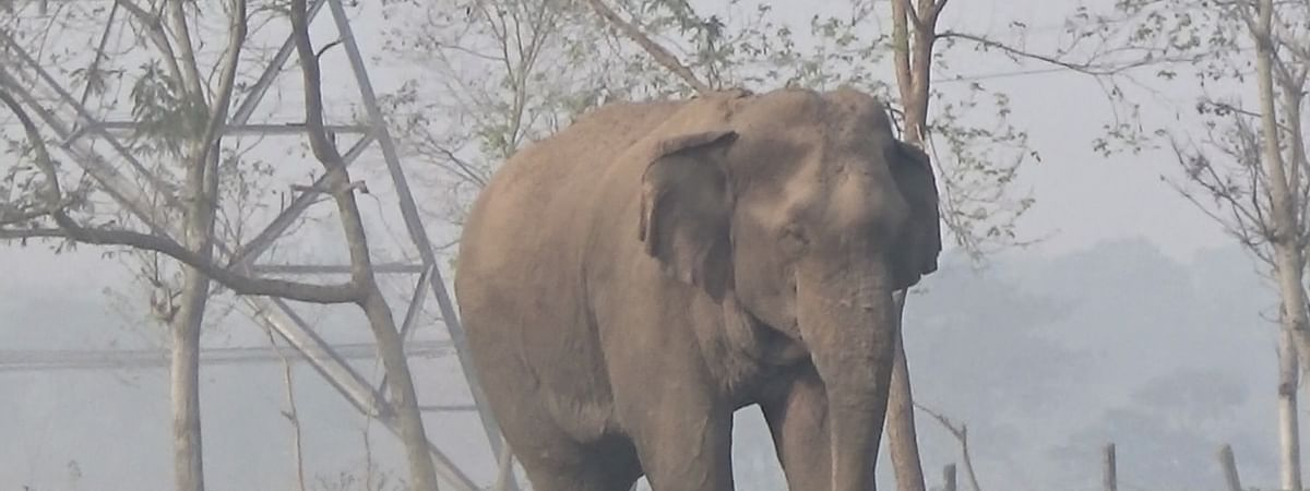 After four hours, Kerala wild elephant rescued from well
