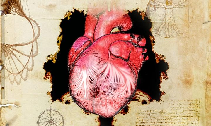 New clues to a 500-year old mystery about the human heart