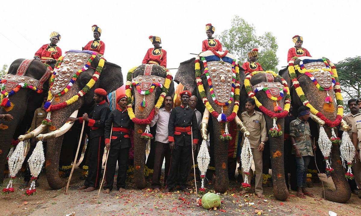 A file photo of elephants participating in the Dasara celebrations in Mysuru in 2017.