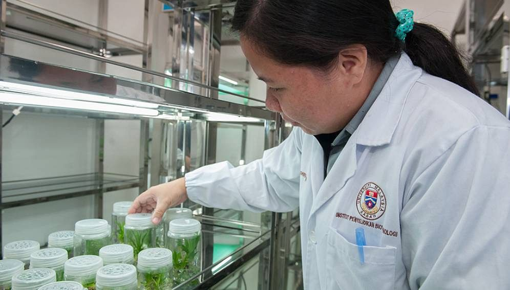 A Malaysian scientist checks samples at a plant tissue culture facility. Malaysia is one of the Asian countries that entered the top 50 of the Global Innovation Index 2020.