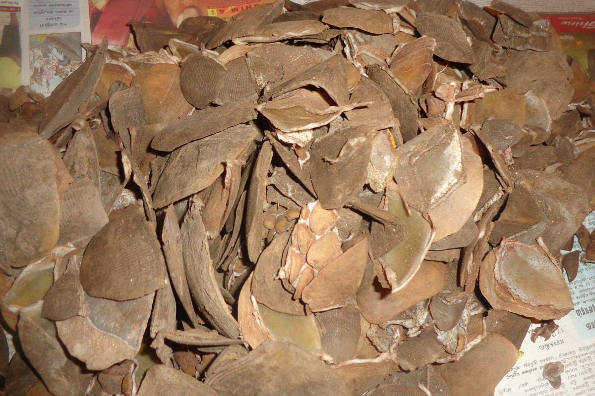 Pangolin scales seizure. Wildlife trafficking is one of the main threats to all eight pangolin species across the world.